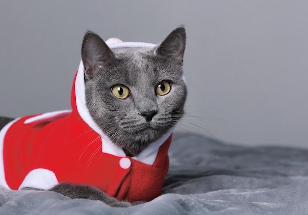 Gato engraçado azul vestido de papai noel deitado na cama