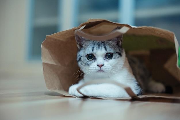 Gato engraçado com grandes olhos amarelos olha curioso em um saco de papel artesanal animais de estimação engraçados brincando