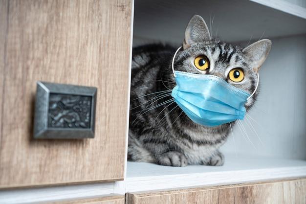Gato engraçado com máscara médica tem medo da quarentena