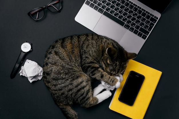 Gato engraçado deitado sobre a mesa de escritório e brincando com bolas de papel amassado. vista superior da área de trabalho de escritório preto com laptop, telefone e suprimentos.