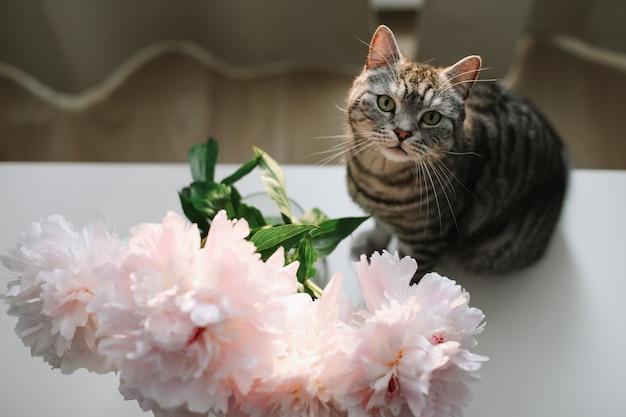 Gato engraçado e um vaso com flores frescas