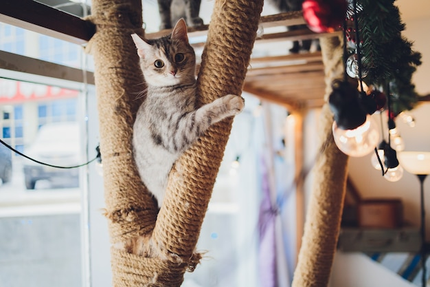 Gato engraçado em casa sentado em casa fundo de natal bonito com decoração de ano novo, árvore de natal com enfeites. cartão de natal com um natal.