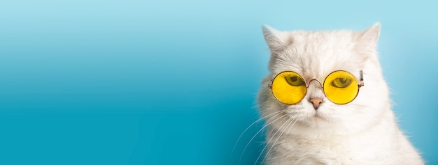 Gato engraçado em óculos de sol. gato com óculos em um fundo limpo e ensolarado azul claro. animais de estimação engraçados, festa, férias, viagens, conceito de verão.