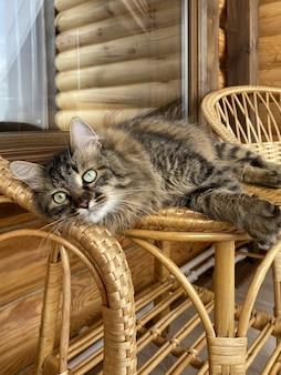 Gato engraçado marrom descansando em uma casa rústica