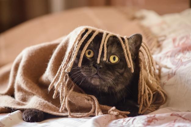 Gato engraçado olhando por baixo de uma manta com franjas