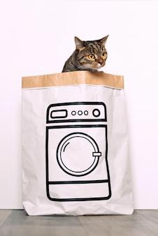 Gato engraçado parece curioso de um saco de papel com uma foto da máquina de lavar. animais engraçados, jogando em casa.