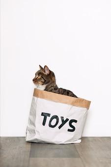 Gato engraçado sentado em um pacote de papel com os brinquedos de inscrição. animais engraçados, jogando em casa.