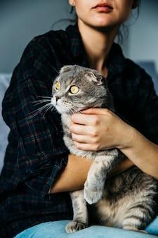 Gato entusiasta nas mãos da amante