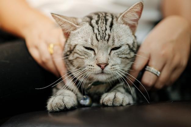 Gato está deitado em um sofá com o proprietário acariciando e brincando.