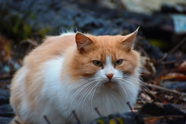 Gato está sentado na casa queimada. gato está esperando pelos donos. gato sobrevivente após o incêndio.