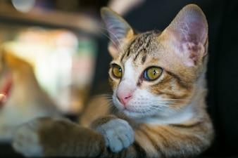 Gato fechado olhando para saber
