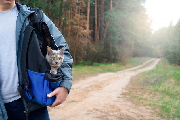 Gato feliz viaja em uma mochila com um homem na floresta