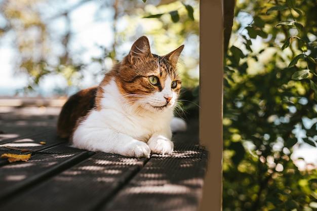 Gato fofinho descansando em uma varanda de madeira no verão com espaço de cópia