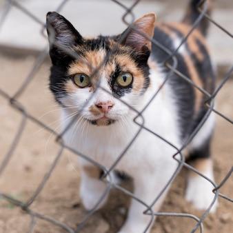 Gato fofo ao ar livre atrás da cerca