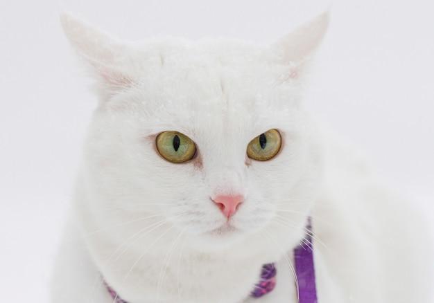 Gato fofo branco fofo caminha na neve na natureza