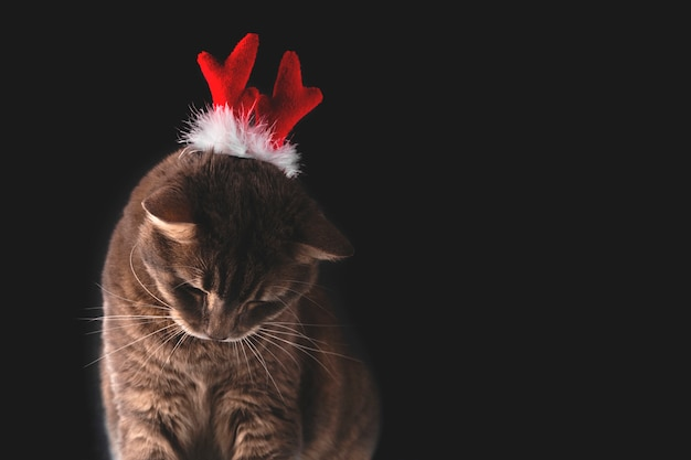 Gato fofo cinza com chifres de veado vermelho em um fundo escuro conceito de natal e ano novo com animais de estimação copiar espaço