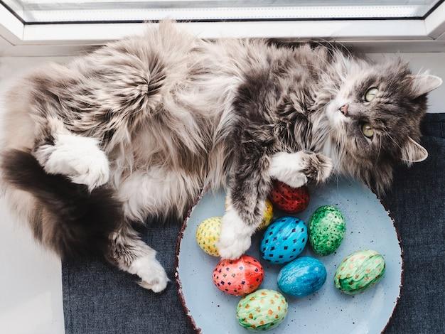 Gato fofo, cinzento e ovos de páscoa