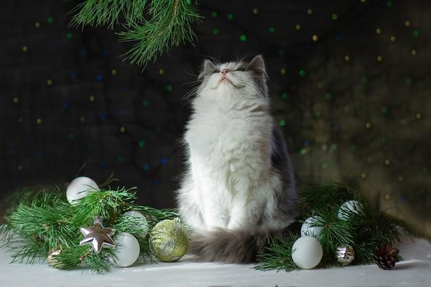 Gato fofo com árvore de natal e decoração