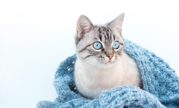 Gato fofo com manta de malha em casa