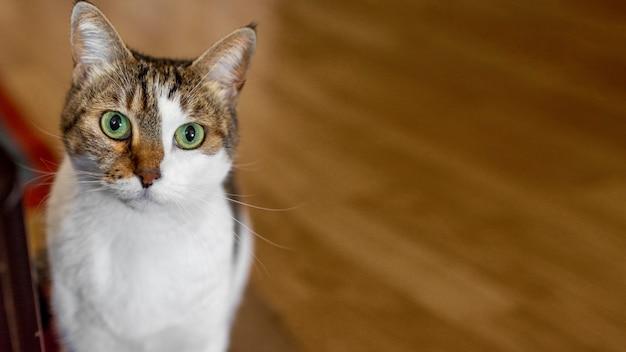 Gato fofo com olhos verdes dentro de casa