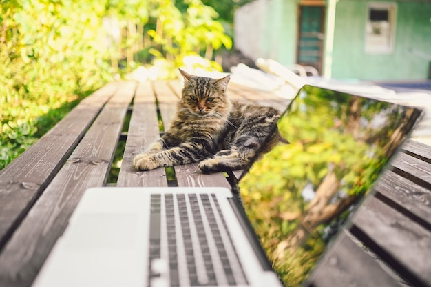 Gato fofo de rua sentado em um banco de madeira ao lado do computador laptop com reflexos de árvores ao ar livre no jardim de verão. conceito de trabalho remoto online