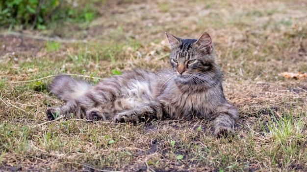 Gato fofo deitado no jardim na grama seca