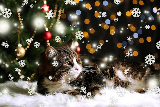 Gato fofo deitado no tapete com decoração de natal