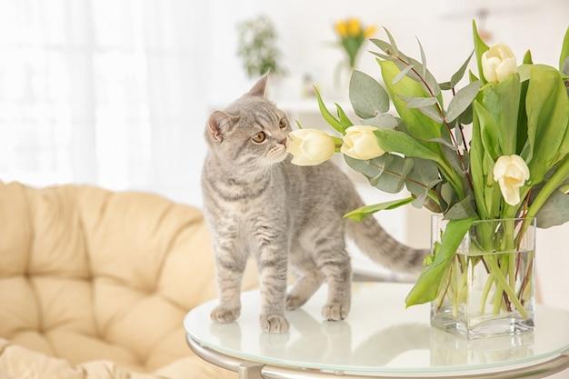 Gato fofo e vaso com flores na mesa na sala de luz
