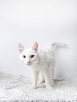Gato fofo em um fundo branco
