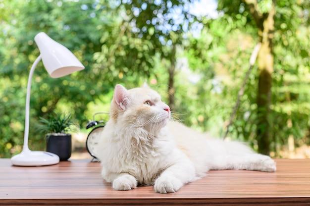 Gato fofo na mesa
