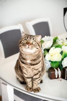 Gato gordo sentado ao lado dos acessórios de casamento na mesa