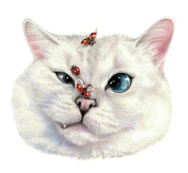 Gato insatisfeito, joaninhas voam por aí. desenho colorido do rosto de um gato. isolado no fundo branco. trabalho de arte de desenho a lápis
