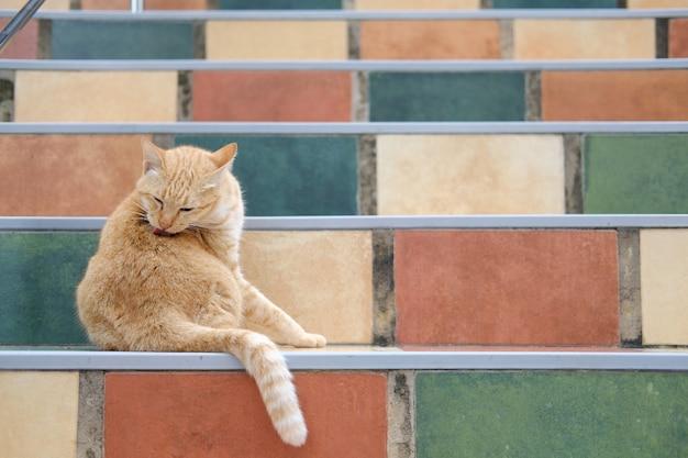 Gato laranja malhado felino lamber preparação nas escadas