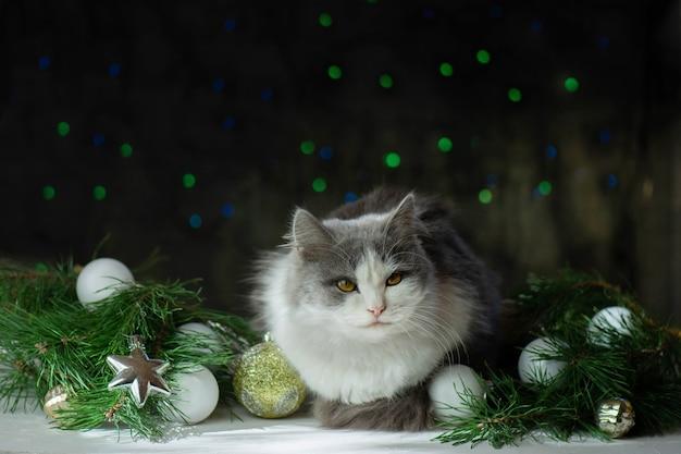 Gato lindo debaixo de uma árvore de natal