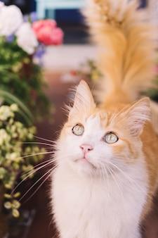 Gato lindo no jardim