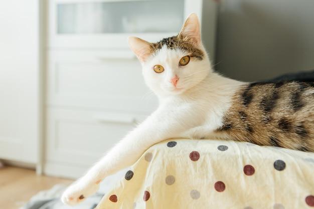 Gato listrado branco encontra-se em um sofá, gato fofo