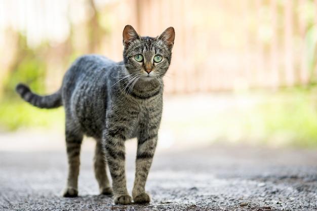 Gato listrado cinzento bonito em pé ao ar livre na rua de verão