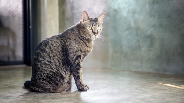 Gato listrado cinzento que senta-se em um assoalho.