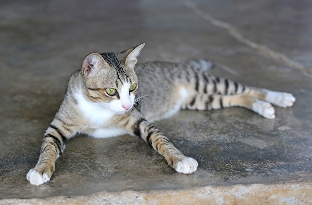 Gato listrado deitado no chão de cimento
