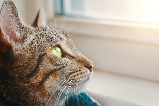 Gato listrado em uma cesta perto do parapeito da janela close-up animal retrato gatinho com olhos amarelos olha pela janela a luz do sol incide sobre o animal de estimação