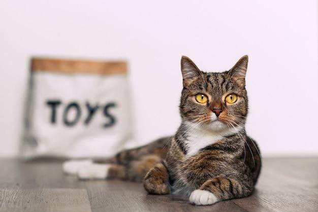 Gato listrado engraçado com grandes olhos amarelos, sentado no chão perto de um pacote de papel artesanal com os brinquedos de inscrição.