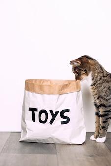 Gato listrado engraçado com olha curiosamente para o pacote de artesanato de papel com os brinquedos de inscrição. animais engraçados em casa.
