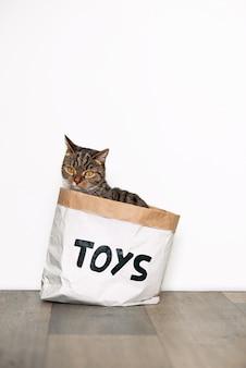Gato listrado engraçado olha curiosamente para o pacote de papel artesanal com os brinquedos de inscrição. animais engraçados em casa.