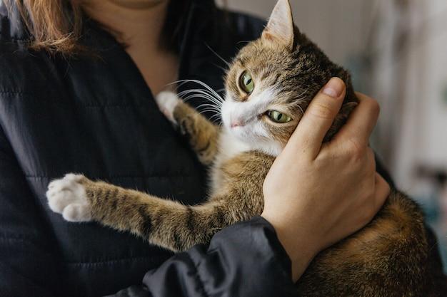 Gato listrado nos braços de uma menina