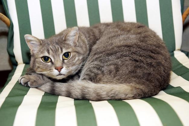Gato mal-humorado deitado na cadeira