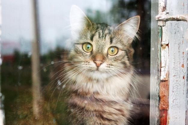 Gato malhado atrás da janela velha