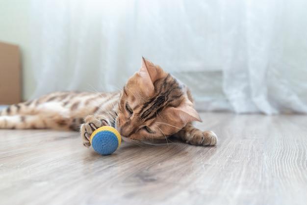 Gato malhado bonito brincando com uma bola de brinquedo na sala.