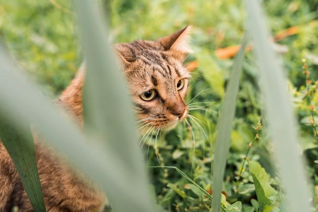 Gato malhado bonito no parque