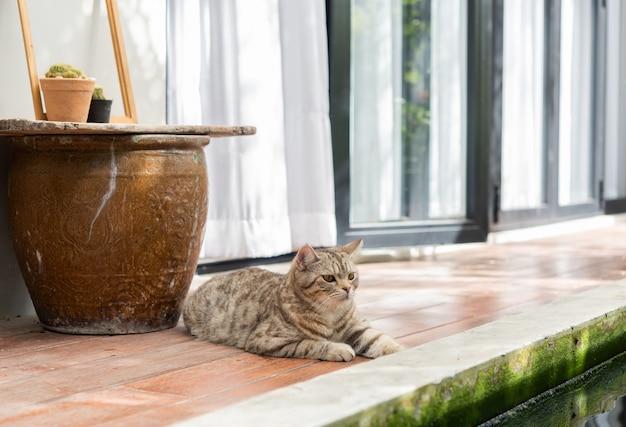 Gato malhado bonito sente-se na varanda de madeira perto de viveiro de peixes, jardim ao ar livre