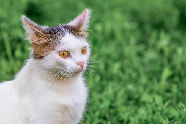 Gato malhado de branco no jardim de perto